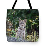 Canadian Lynx Tote Bag