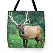 Canadian Rockies # 7 Tote Bag