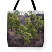 Canary Pines Nr 2 Tote Bag