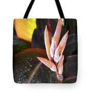 Canna Lilies IIi  Tote Bag