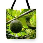 Cantaloupe And Hanging On Tree 1 Tote Bag