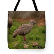 Cape Barren Geese Facing Right Tote Bag