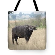 Cape Buffalo Eating Grass In Queen Elizabeth National Park, Ugan Tote Bag