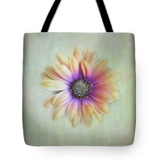 Cape Daisy Looking Up Tote Bag