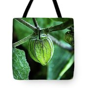 Cape Gooseberry In July Tote Bag