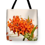Cape Honeysuckle - The Autumn Bloomer Tote Bag