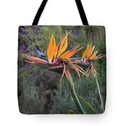 Captivating Bird Of Paradise In Full Bloom Tote Bag
