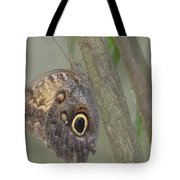 Captivating Photo Of A Brown Morpho Butterfly Tote Bag