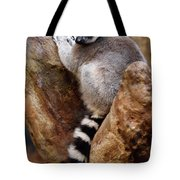 Captive Ring Tailed Lemur Perched In A Stone Tree Tote Bag