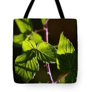 Captured In Morning Light Tote Bag