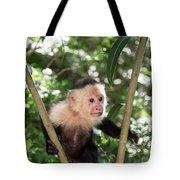 Capuchin II Tote Bag