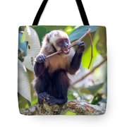 Capuchin Monkey Chewing On A Stick Tote Bag