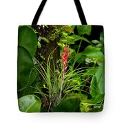 Cardinal Airplant Tote Bag