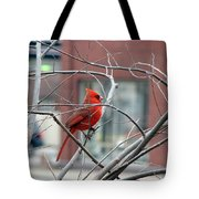 Cardinal Amid The Twigs Tote Bag