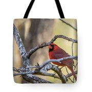 Cardinal Among The Branches Tote Bag