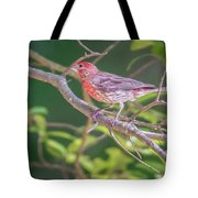 Cardinal Bird In The Wild In South Carolina Tote Bag