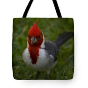 Cardinal Front View In Grass Tote Bag