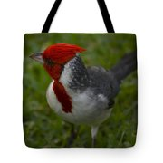 Cardinal Grazing In Grass Tote Bag
