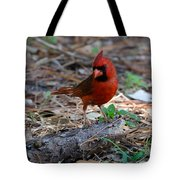 Cardinal In Charge Tote Bag by Julie Cameron