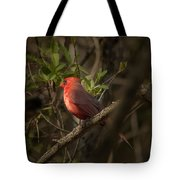 Cardinal In The Spotlight Tote Bag