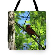 Cardinal In The Springtime Tote Bag