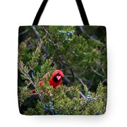 Cardinal Lunch Tote Bag