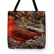 Cardinal On Pine Straw Tote Bag