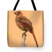 Cardinal Portrait Tote Bag by Karen Lindquist