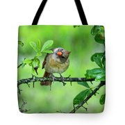 Cardinal Ways Tote Bag