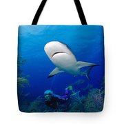 Caribbean Reef Shark Tote Bag by Dave Fleetham - Printscapes