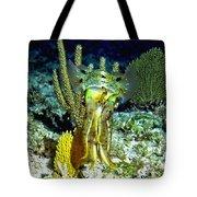 Caribbean Squid At Night - Alien Of The Deep Tote Bag