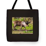 Caribou Antlers In Velvet Tote Bag