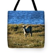 Caribou Fawn Tote Bag