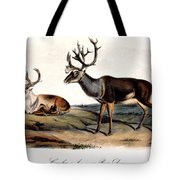 Caribou (rangifer Caribou): Tote Bag