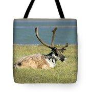Caribou Resting Tote Bag