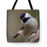 Carolina Chickadee 2 Tote Bag
