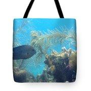 Carribean Sea Life Tote Bag