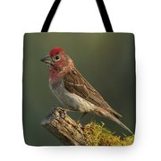 Cassin's Finch Tote Bag
