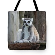 Casual Lemar  Tote Bag