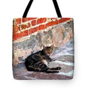 Cat Against Stone Tote Bag