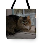 Cat By Candlelight Tote Bag