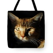 Cat In Shadow Tote Bag