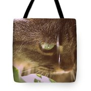 Cat In Sunlight Tote Bag