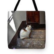 Cat On Steps Tote Bag