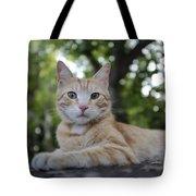Cat Volterra Italy Tote Bag