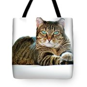Cat With Bright Eyes Tote Bag
