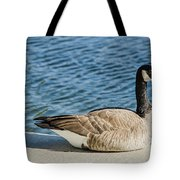 Catching Some Rays Tote Bag