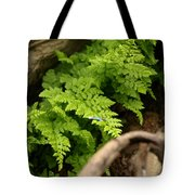 Catching The Fallen Tote Bag