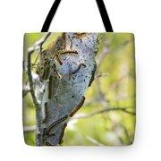 Caterpillars #2 Tote Bag by Stephanie  Varner