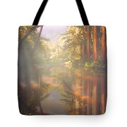 Cathedral Redwoods Tote Bag